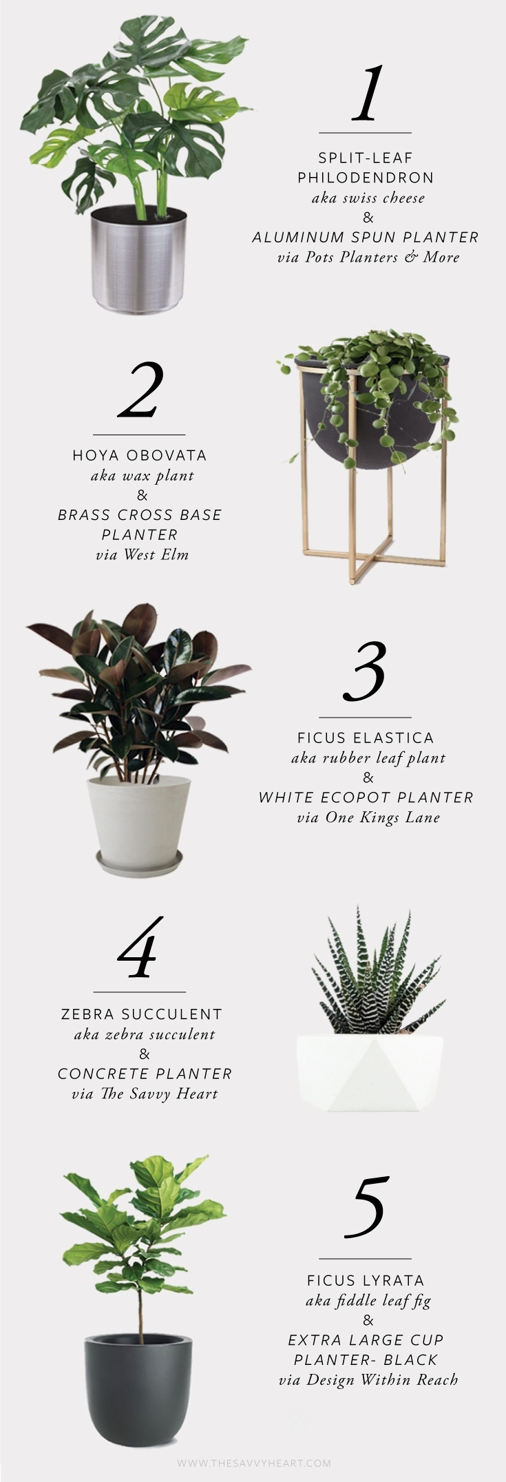 5-stylish-and-modern-house-plant-and-planter-combinations-by-the-savvy-heart.jpg