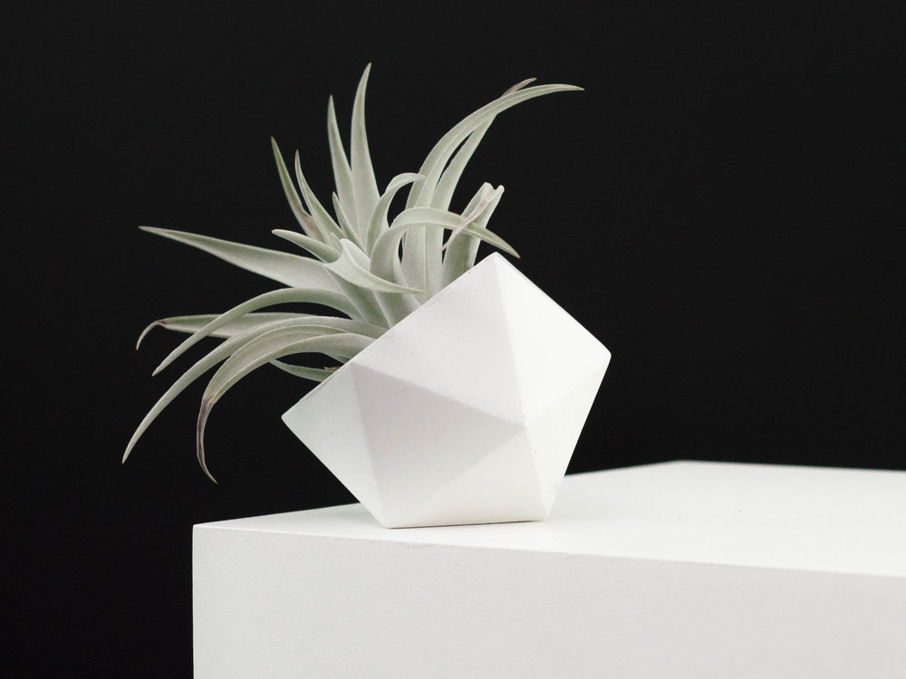 Modern White Concrete Air Plant Vessel by The Savvy Heart